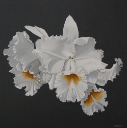 Frilled Orchid