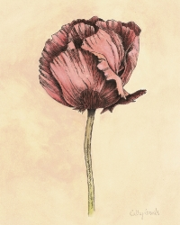 Red Poppy Oil & Ink on Paper